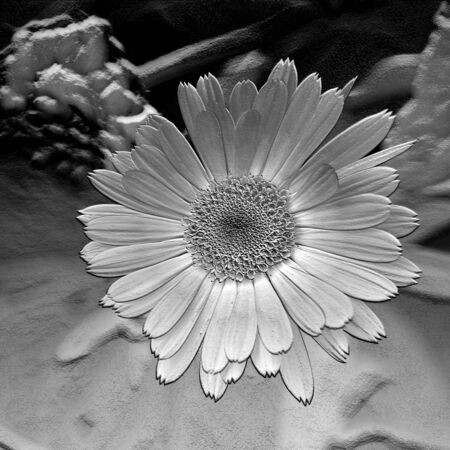 monochromic: Flower. Abstract floral backdrop. Graphic arrangement. Stock Photo