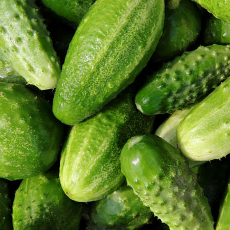 cuke: Fresh small cucumbers for sale at market.
