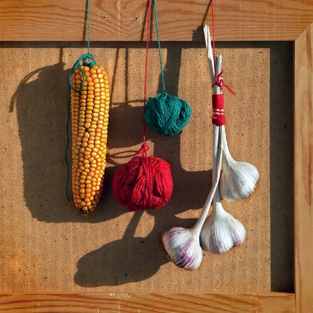 Still life with bunch of garlics, Indian corn and color balloons of yarn.  photo