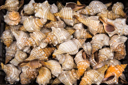 Seashells for sale at market.  photo