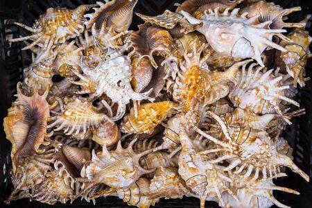 Seashells at market.  photo