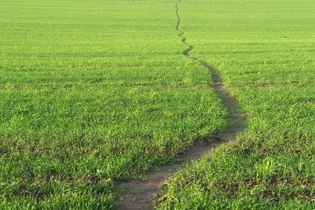 Wavy line of path walk. Green grass background.