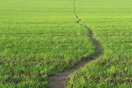 Wavy line of path walk. Green grass background.