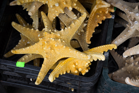 Starfish  Asteroidea  for sale at market