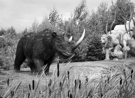 Model of ancient Wooly Rhinoceros in Jurassic park in Leba, Poland. Height - 1,7 m, weight - 3 - 4 t.