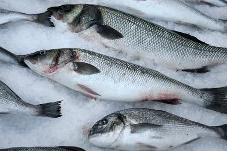 scales of fish: Peces de agua salada fresca en hielo picado.