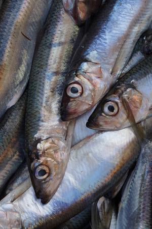 saltwater fish: Fresh saltwater fish at a market.