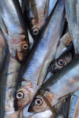 saltwater fish: Fresh saltwater fish. Stock Photo