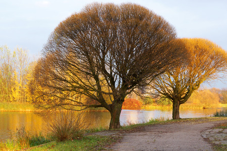 Crowns of trees in autumn. Stock Photo
