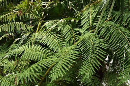 Green foliage of fern.