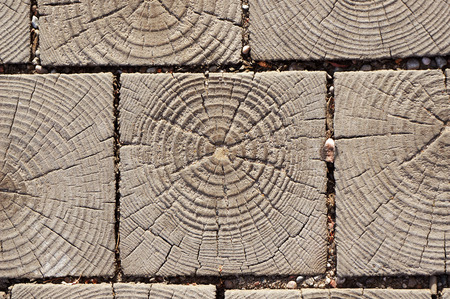 Wooden cross section texture. Pavement blocks. Natural beige and brown background.