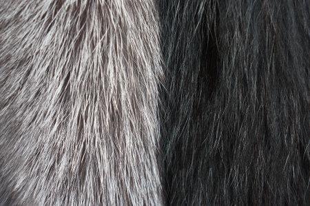 Closeup of silver fox fur. Banque d'images