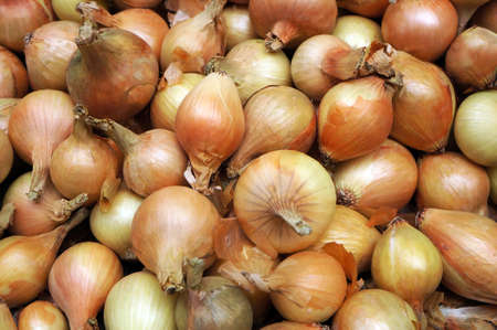 Heap of ripe raw onions as vegetable background. Banque d'images