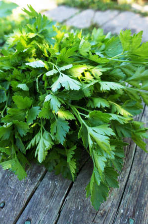 Bunch of fresh green parsley on old wooden table. Selective focus. Banque d'images