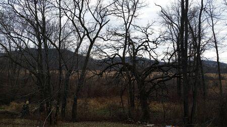 hardwoods: Wicked Trees