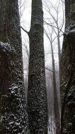 hardwoods: Woods of Round Knob