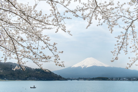 fujisan: Sakura with Fujisan Stock Photo