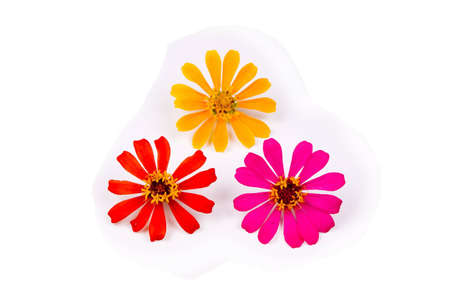 back ground: three different kinds of flower with white back ground