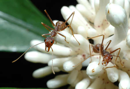 symbiotic: ants on a wild flower with dark back ground
