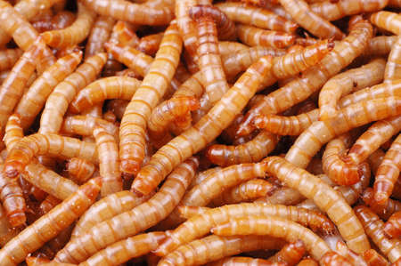 a lot of worms close up shot. Stock Photo - 1438934