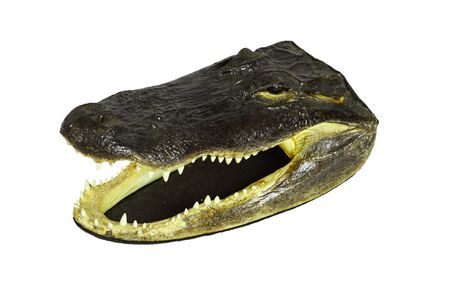 Head of real alligator on white background photo