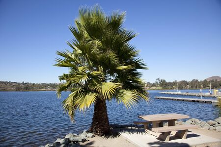 Alone palm in front of Santee lake in San Diego, California photo