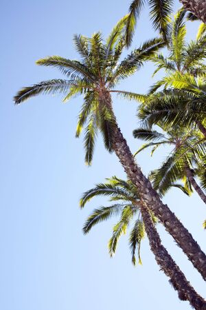 View of palm trees Stock Photo