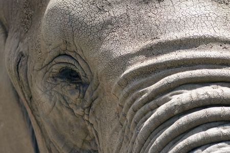 Close up view of elephant face Stock Photo