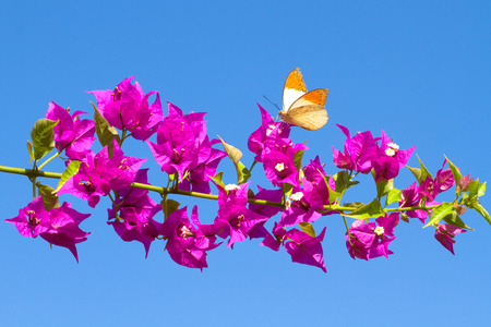 Picture of butterfly feeding from red flowers. photo