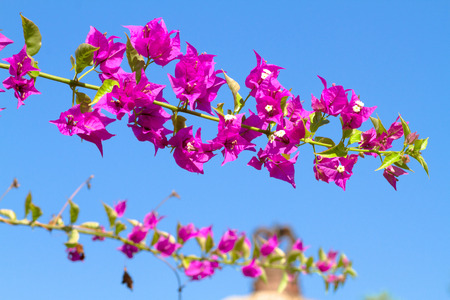 Pink blooming flower against the blue sky. photo