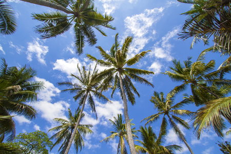 Beautiful Palm Trees on the Tropical Island. photo