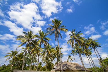 Beautiful Palm Trees on the Tropical Island. photo