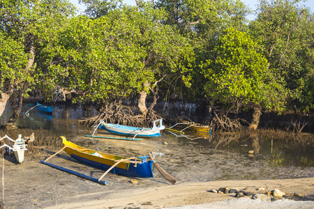 mangrove: Mangrove trees