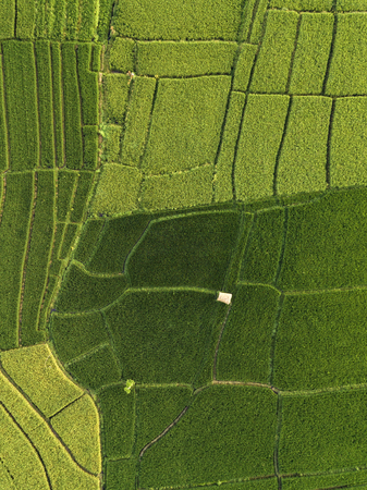 Aerial view of rice fields at day time,Bali,Indonesia 版權商用圖片