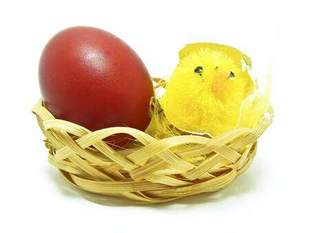 Pet & Egg Stock Photo - 2730062