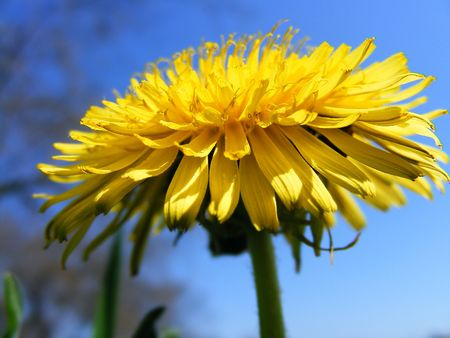 Blue & yellow photo