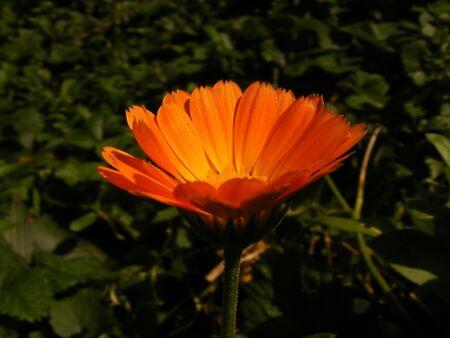 immaculate: Orange & green