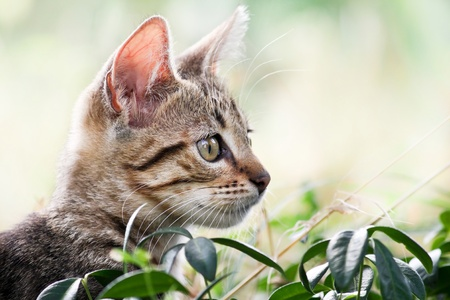 Cat plays and hides in the grass - Hidden cat in natural environment  photo