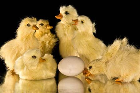 Yellow Baby Ducks Imagens