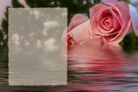 柔らかいバラ反射水浸漬