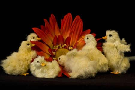 baby ducks: Six baby ducks exploring large flower