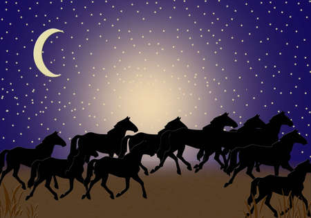 Horses Midnight Walk