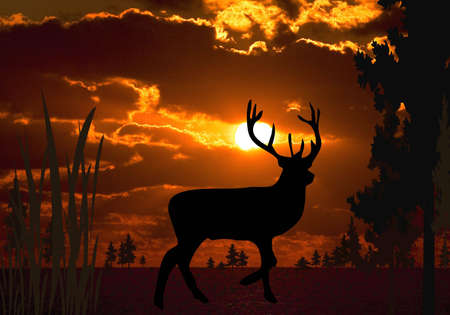 Large buck as silhouette in sunset  Banco de Imagens