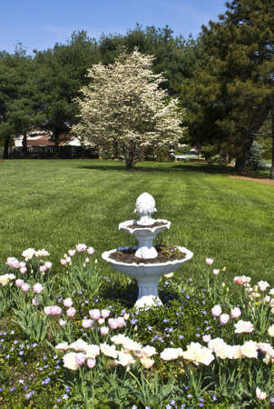 Yard with tulip garden in forefront and apple blossom tree in background