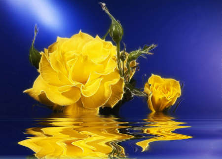 reflection: Floating yellow rose Stock Photo