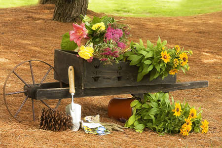 Working in Garden while putting flowers in small wheel barrel.