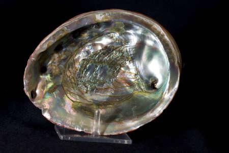 アワビの貝殻 写真素材 - 5109326