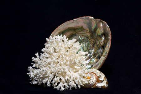 盛り合わせ海の貝殻 写真素材