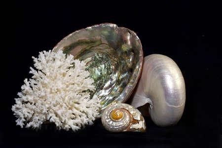 海の貝の品揃え 写真素材 - 5109325