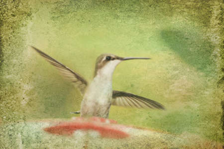 feeder: Hummingbird TExture Print